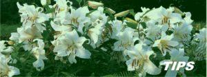 bloemen planten TIPS