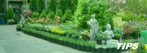 tuincentrum bloemen en planten TIPS