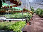tuincentrum belgië Nederland