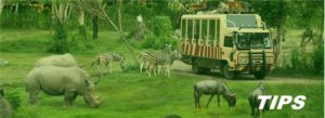 Afrika safari TIPS