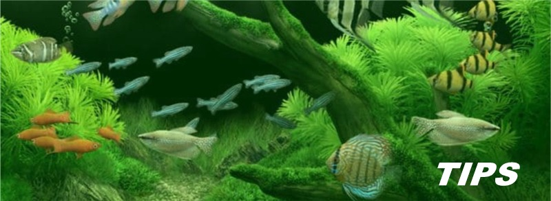 aquarium vissen planten TIPS
