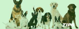 5000+ TIPS honden pups rashonden kopen en verzorgen