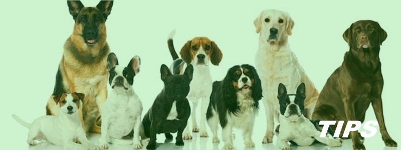honden pups rashonden TIPS