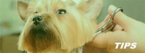 hondenkapsalon trimsalon TIPS