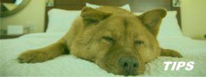hondenpension dierenhotel TIPS