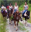paardrijden TIPS paarden