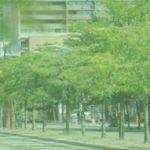 CO2 opname door bomen hoger in stad - onderzoek