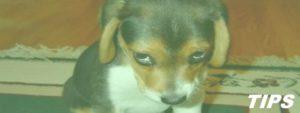 5000+ TIPS - Honden hebben zich aangeleerd om sip of triest te kijken