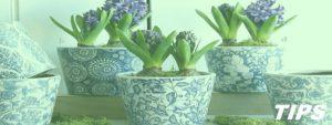 potplanten leuke TIPS
