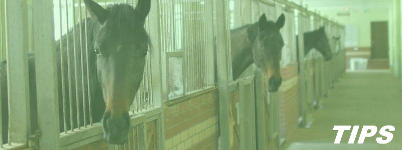 5000+ TIPS - Paard op stal paardenstal TIPS