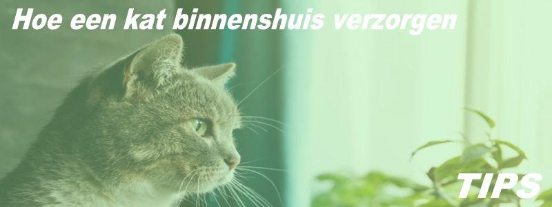 5000+ TIPS - Hoe kat binnenshuis verzorgen